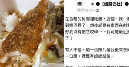 吃便當誤吞「史前巨蟑」 他形容「超崩潰口感」:跟配菜一樣