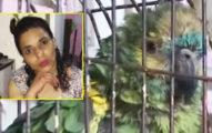 女房東離奇過世...警察帶走「鸚鵡」當證人:牠聽到遺言