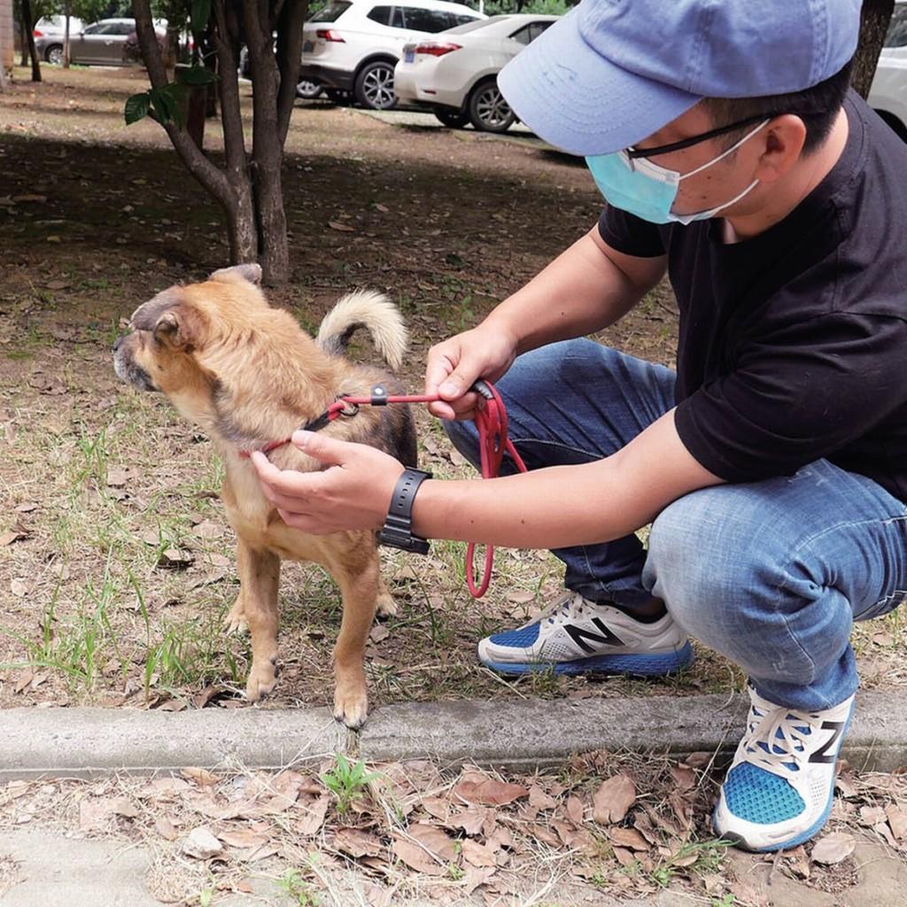 武漢醫院「狗狗癡等」3個月不走 院方透露:主人不會回來了...