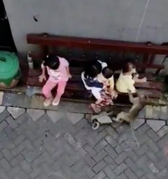 影/印尼發生「潑猴擄小孩」恐怖事故 「騎車找獵物」手法超熟練