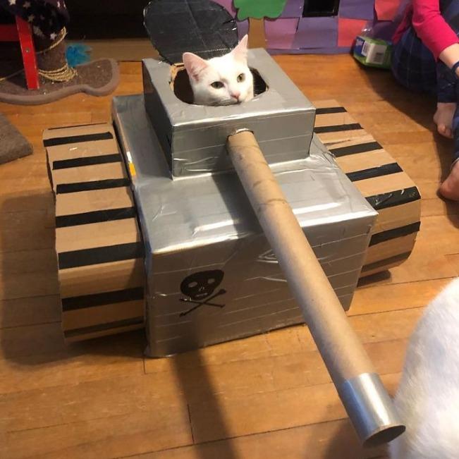 10張「讓貓咪佔領世界」紙箱坦克 毛孩當「厭世駕駛」眼神死!