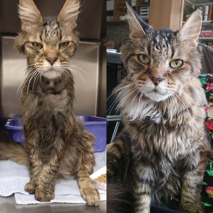23張「以為被掉包」的毛小孩對比照!貓貓被說「你最可愛」臉超爽