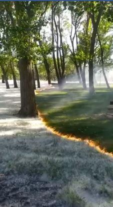 公園棉絮太多掃不完...厭世清潔工「直接放火燒光」!