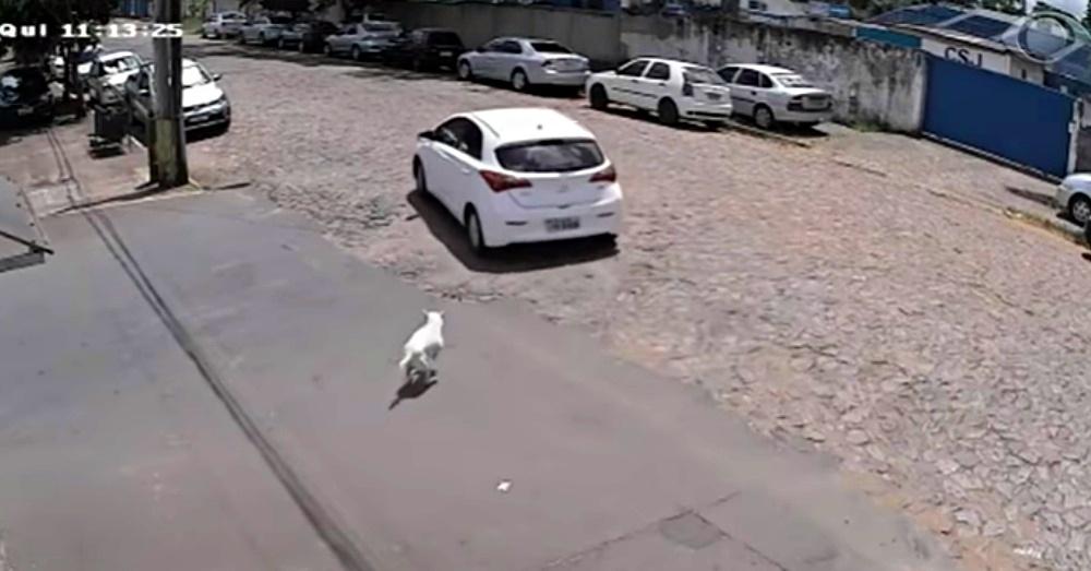 影/王八飼主把「斷腿狗狗」丟路邊 「跛腳狂追」還被推頭撞地!