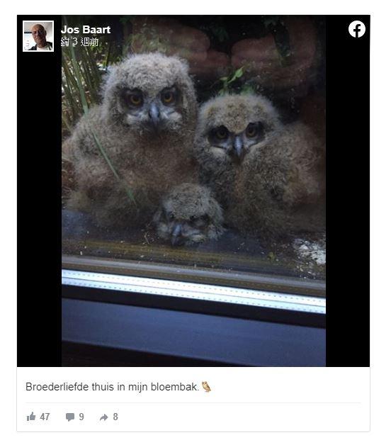 貓頭鷹寶寶成「電視兒童」每天緊貼他家玻璃「看8小時」