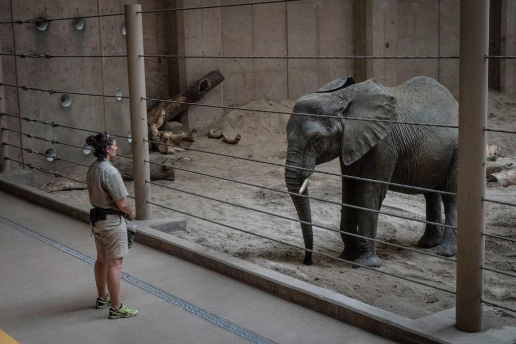 動物園因武肺關閉!專家曝「動物得相思病」:牠們已習慣被看