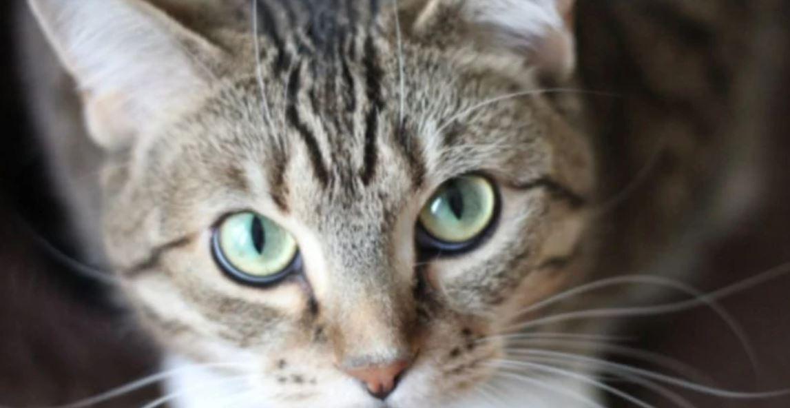 愛貓被「屁孩鄰居」當花澆水 女子「激烈報復」家長抓狂!