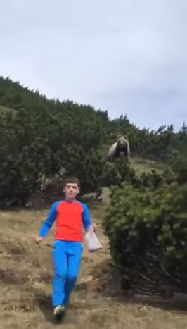 12歲男孩被熊跟蹤「用散步保住小命」千萬不能尖叫!