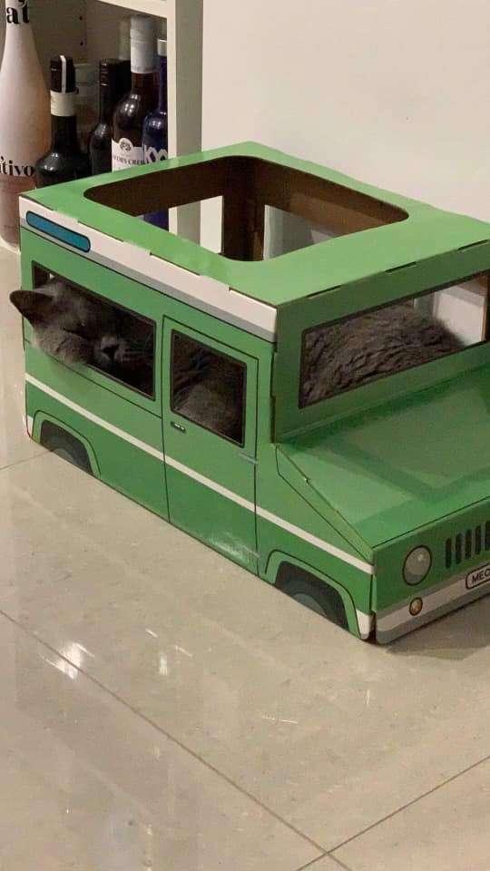 臭臉貓「不愛玩具」超難搞 坐上吉普車「秒變臉」終於開心了!