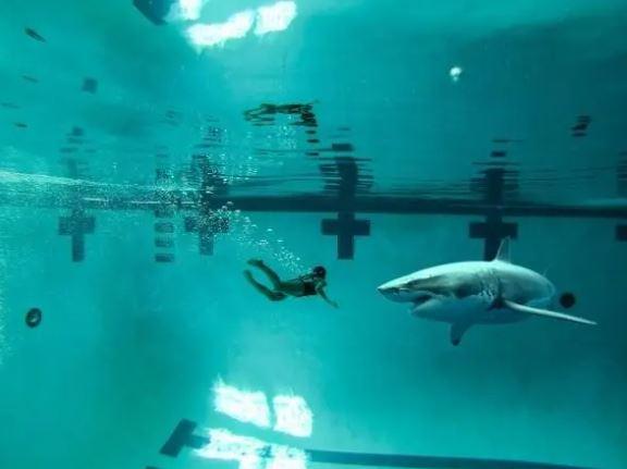 29張圖激發你的「深海恐懼症」 鐵達尼號「這一幕」嚇慘觀眾!