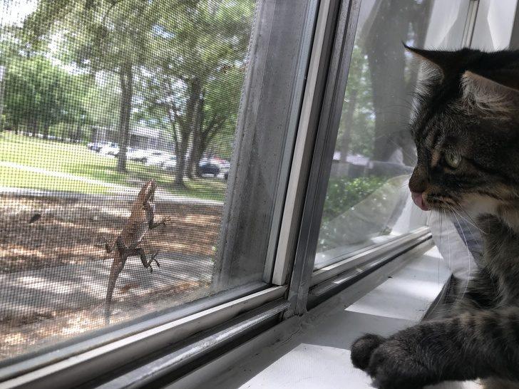 20張療癒人心的「異種動物友誼照」 貓皇真的統治世界了!