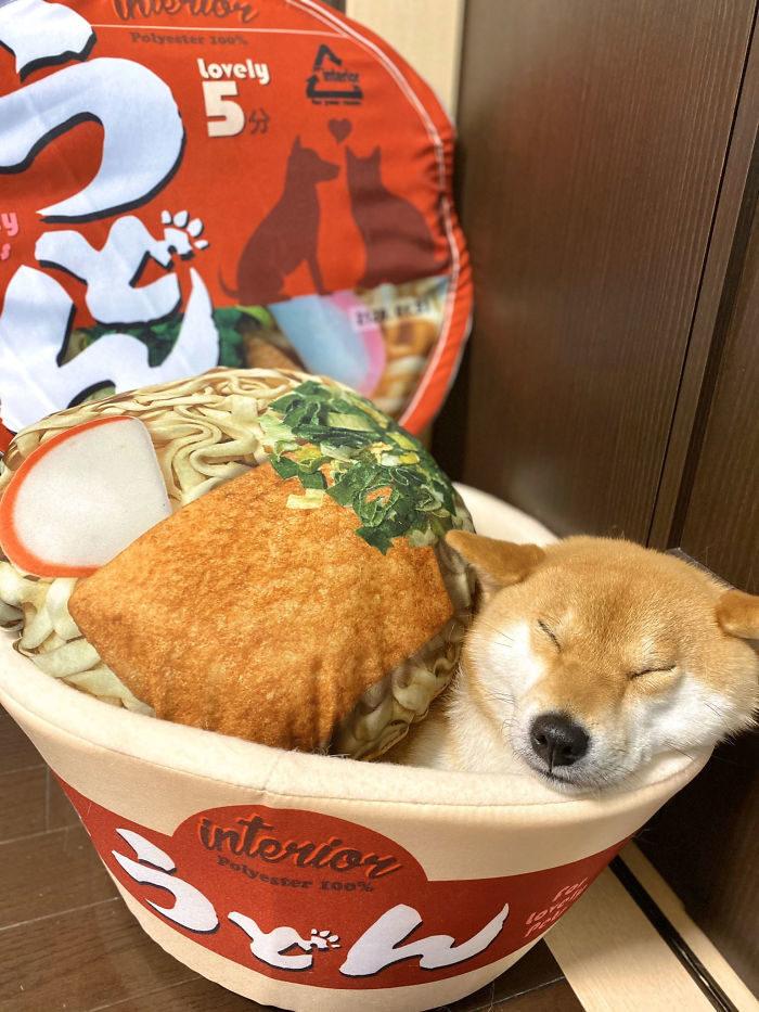 奴才狂搶「泡麵」上貢毛孩 把「美味變枕頭」爽抱著睡!