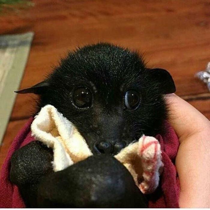27張蝙蝠「其實超級可愛」證據 抱大拇指撒嬌真的太萌❤
