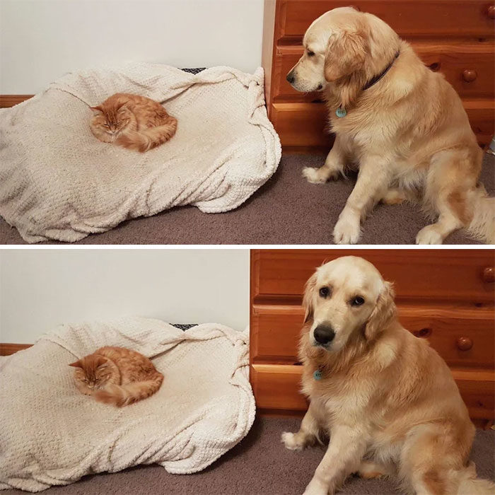 25張能證明「貓咪至高無上地位」的鐵證...狗狗總是輸