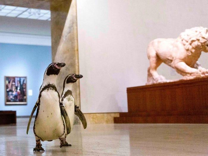 企鵝「逛博物館」找到最愛的畫作 館長說「牠們懂的語言」來介紹!
