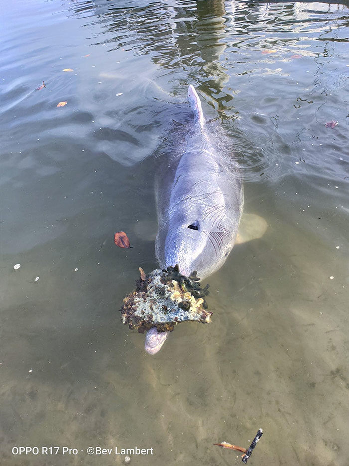 海豚每天「送禮物」討歡心 員工揭「心機內幕」:得付出代價!