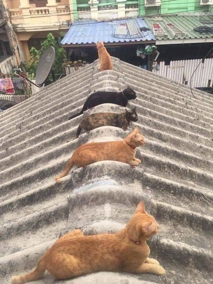 市場的「圈圈」全被貓咪霸佔 專家:牠們在教人類「安全距離」