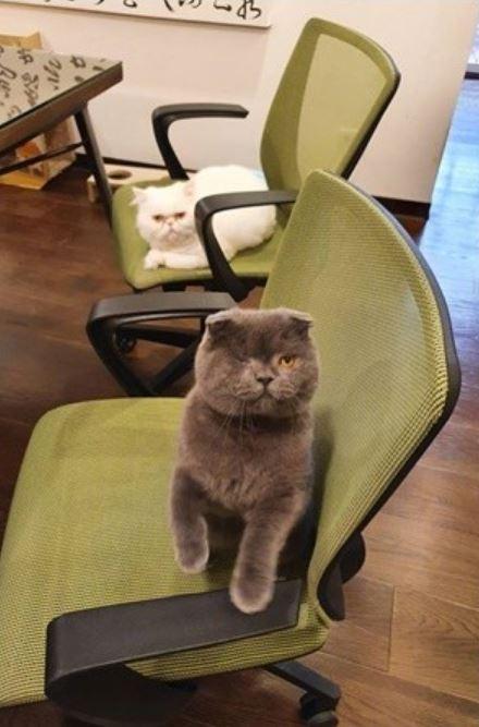設計公司「開45K」請人來玩貓 貓奴暴動:我很會吸!