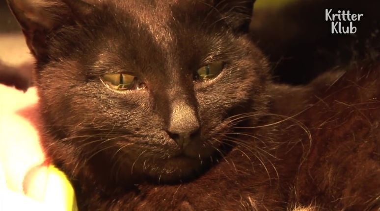 影/黑貓「失去寶寶」超悲痛 獸醫送上「驚喜禮物」牠瞬間落淚!