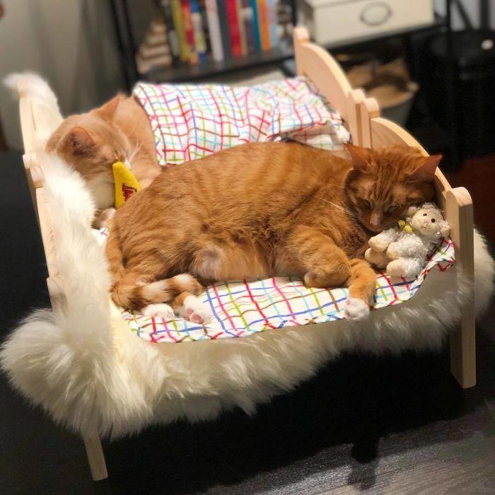 貓奴爆搶「IKEA娃娃床」回家進貢 改成「上下舖」連狗都愛!