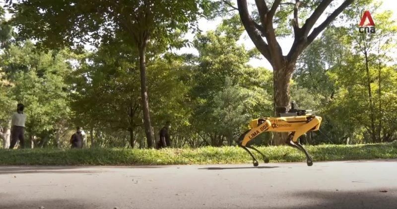 新加坡研發「機器狗」宣導社交距離 抓到直接「關6個月」!