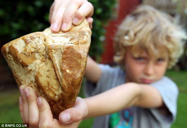 撿一塊「龍涎香」等於撿到賓士?它「從哪裡來」會讓你超反胃!