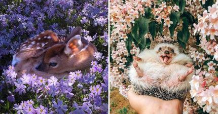 自然界最美妖精!動物寶寶的「花海網美照」真的有小鹿斑比❤