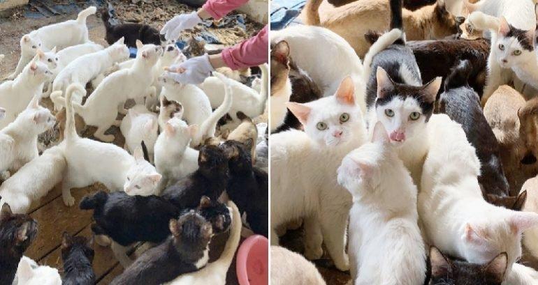 民宅偷養「200多隻貓」地板還有貓骨 房客:就放著讓牠生