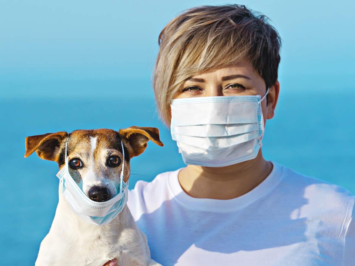 研究證實人類可能「害狗確診」 貓咪還會互相傳染!