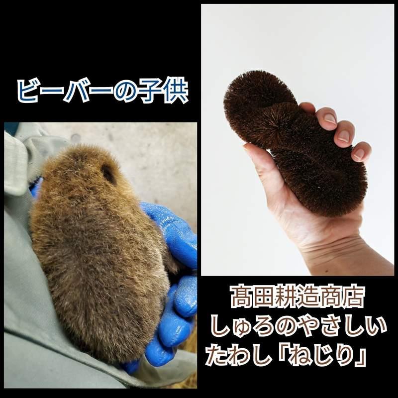 飼育員發現「河狸寶寶」長得怪怪的 看迷因圖才找到恐怖真相!