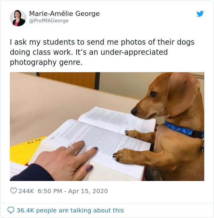 教授要求「狗狗寫作業」來自肥 奶汪「算數學」反應跟人超像