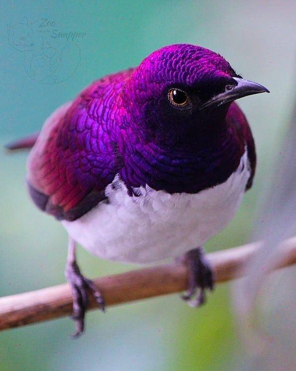 超美小鳥被封「飛行紫水晶」 網爆料:牠有「超惡劣個性」!