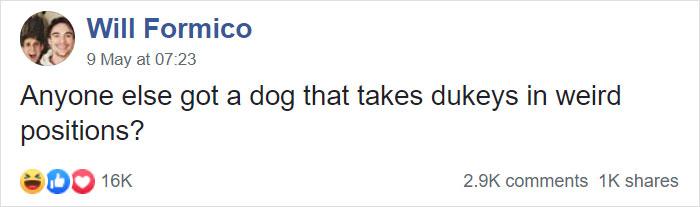 狗狗「大便姿勢超怪」主人笑翻 好命犬「沒風景看」大不出來!