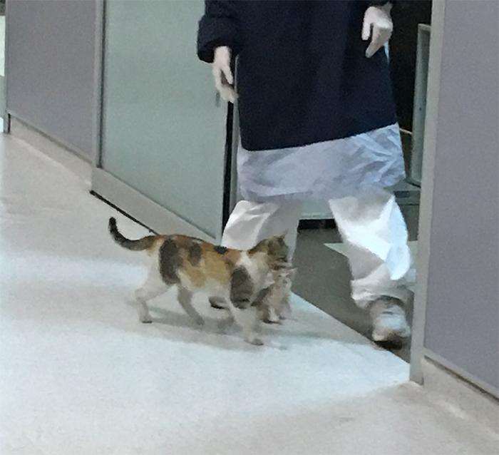 母貓「帶小孩掛急診」 護士「秒變貓奴包圍」待遇超越VIP!