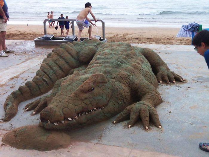 海邊出現「動物園」人類超興奮 踩到竟「整個碎掉」才知道厲害