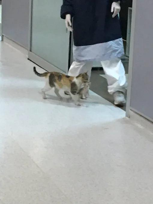 浪貓媽「叼寶寶進急診室」找人類求救 母愛感動上萬網友❤