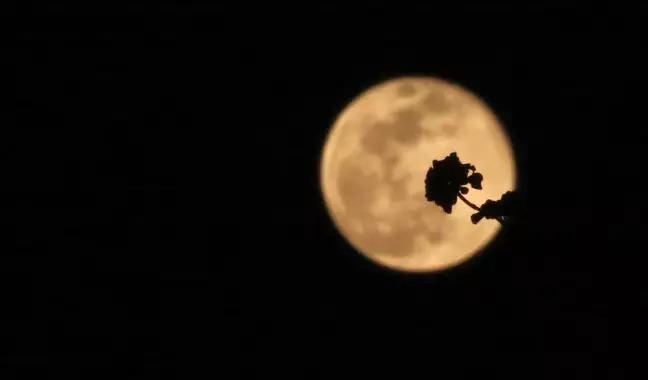 2020年「最後一個超級月亮」花月來了 就在今天!
