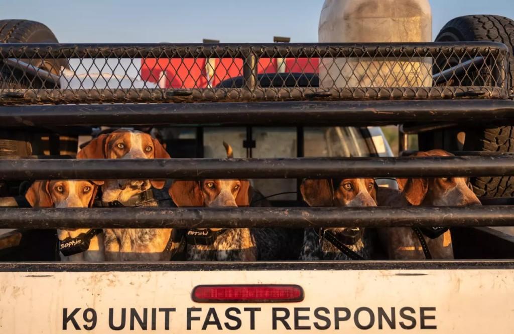 被訓練成「野生動物侍衛」的獵犬 專門收拾「自私的人類」!