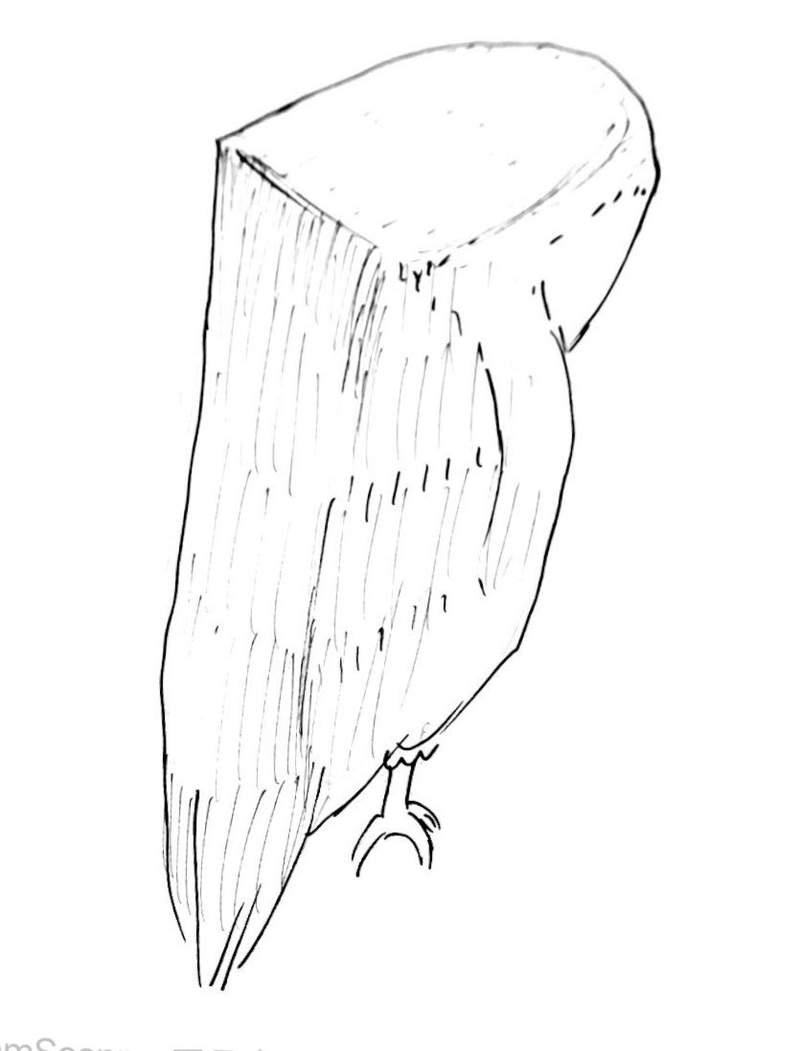 貓頭鷹只要主人打掃就「嚇到變樹枝」 網笑翻:聲音真的不行