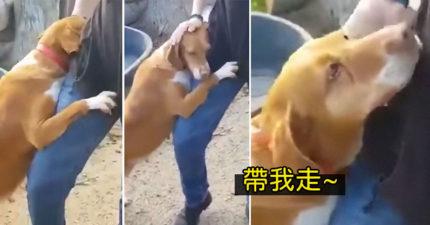 收容所狗狗「緊抱大腿」不肯放 最後「終於得逞」直接被帶出場!