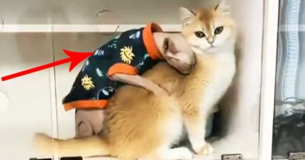 影/「中年大叔貓」完美呈現「解封後的男生」內心的渴望!