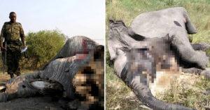 百隻大象「集體死亡」超異常 「不能送驗」無法查出真相!