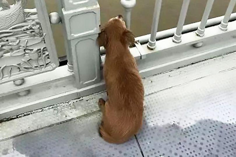 主人「往下一跳」結束人生 狗狗「以為他去玩水」橋上等4天!