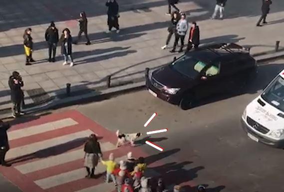 影/牠每天「護送小朋友」過馬路 還會「狂追叫罵」沒禮讓的車!