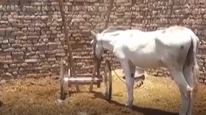 群眾公開聚賭被捕 警察「連驢子都抓走」原因超傻眼!