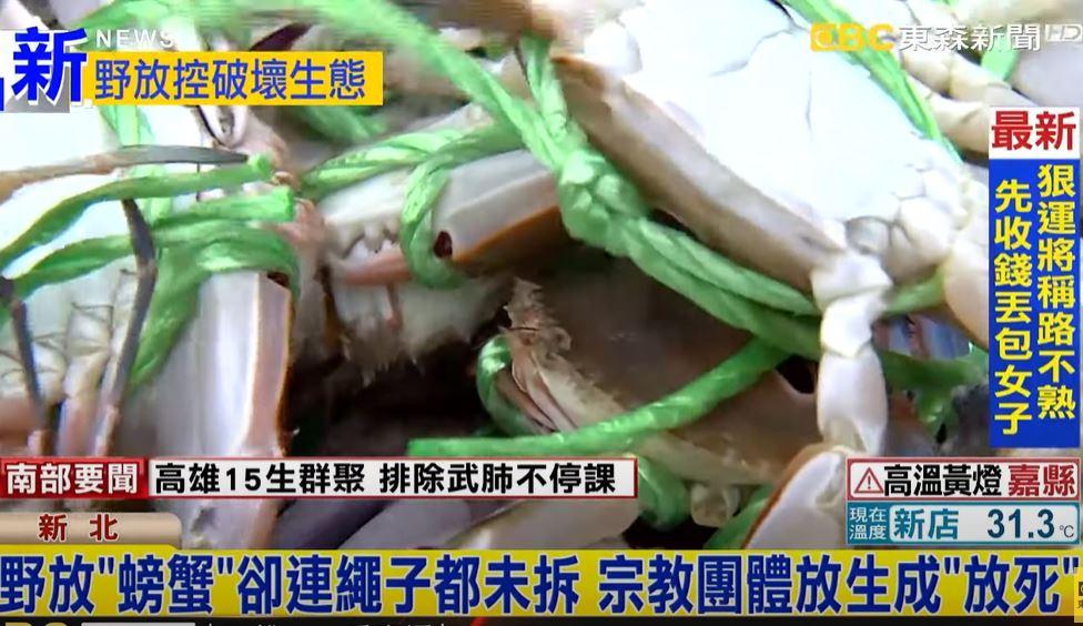 宗教團體「放生積陰德」卻沒拆繩子 無辜螃蟹慘遭「放死」