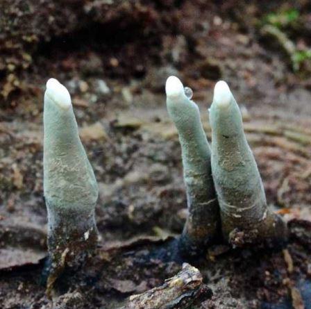 樹下出現「殭屍腳趾」有超噁灰指甲 專家:人類可以吃
