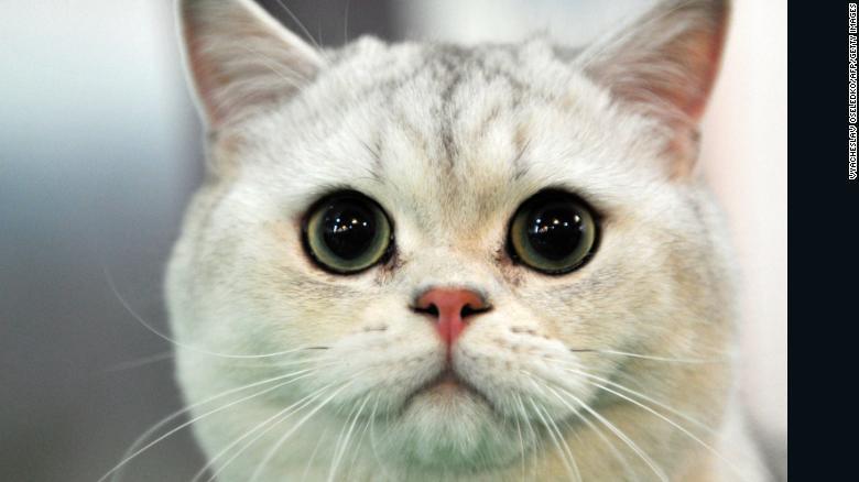 最新研究顯示:養貓男「更難交女友」...抱貓太不MAN!