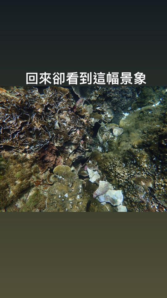 墾丁遊客「省錢浮潛」沒裝備 海底變「珊瑚墳墓」當地人超心痛!