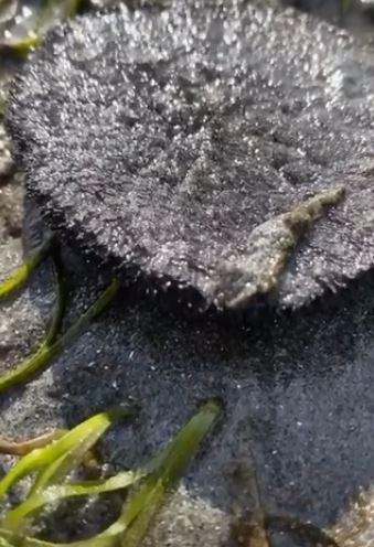 沙灘發現來自「異世界的黑色粉末」 百萬觸手「衝出竄動」超噁
